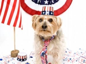 dog_fourth_of_july