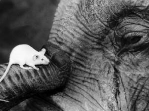 elephant-mouse