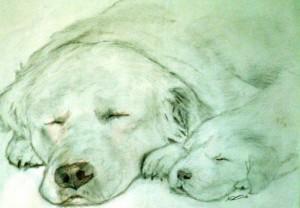 let-sleeping-dogs-lye-andrew-davies